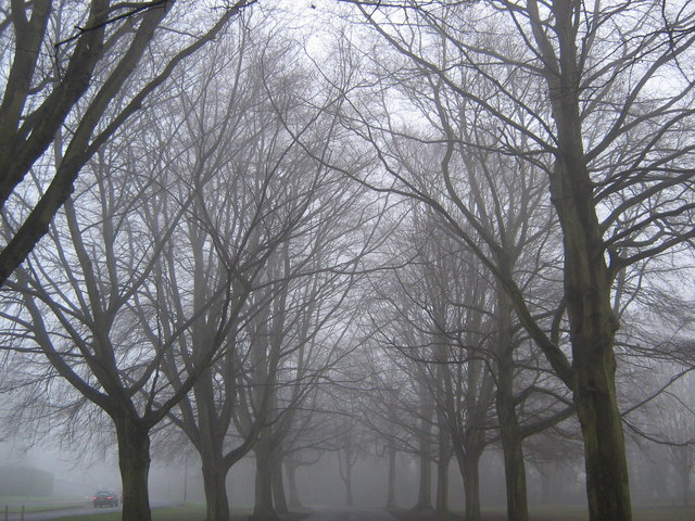The Promenade in fog