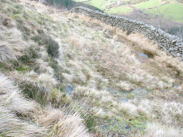 A hillslope spring