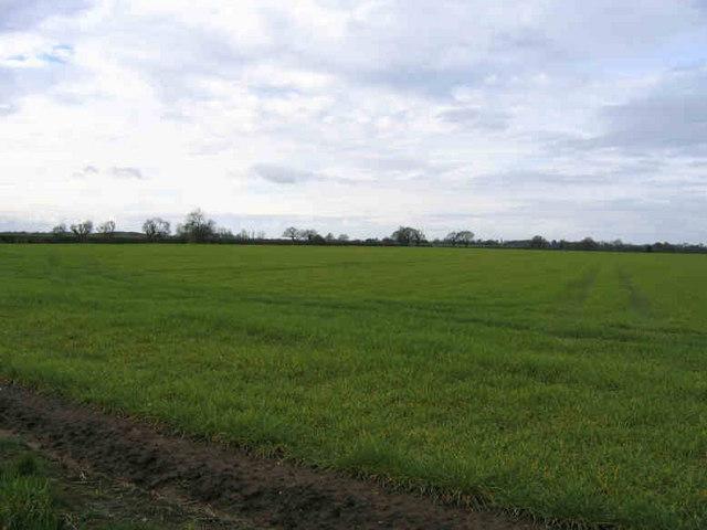 In The Flat Field