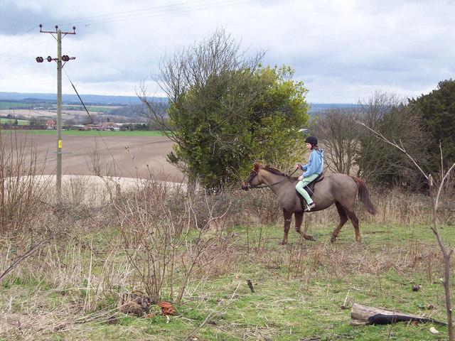 Rider on Stockbridge Down