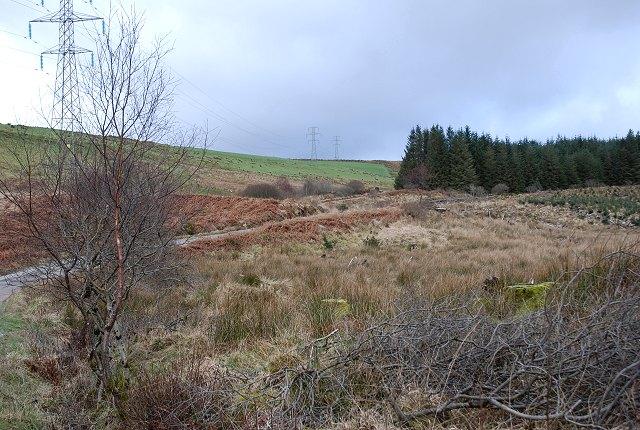 Forestry near Garvachy
