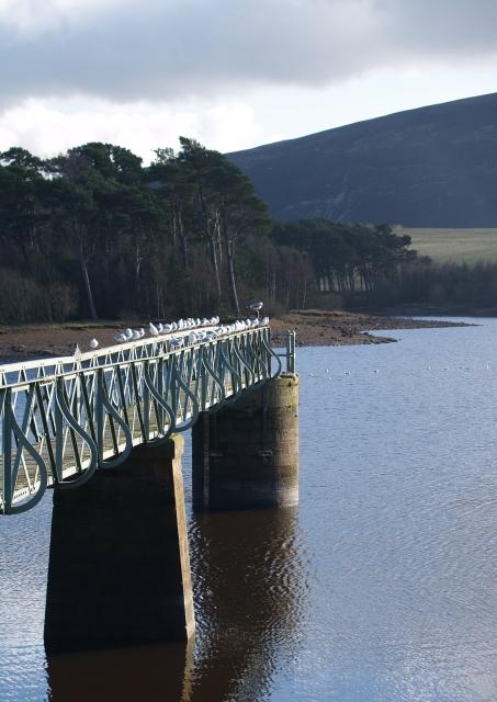 Seagulls, Harlaw Reservoir