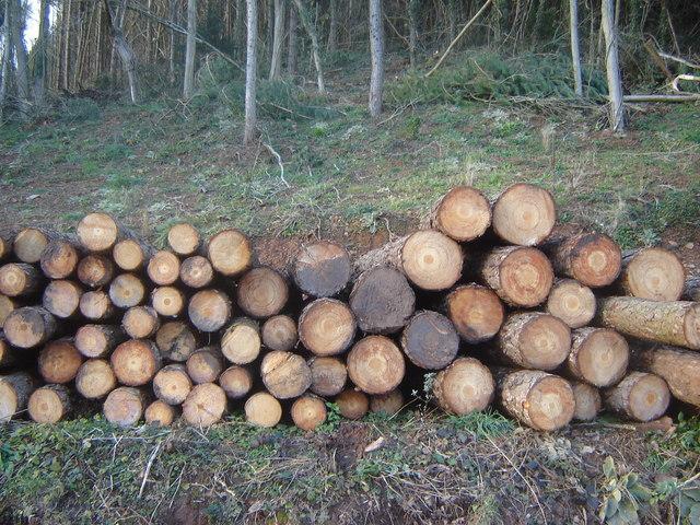 Logging at Cuhere Wood, near Llanvair Discoed