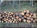 ST4592 : Logging at Cuhere Wood, near Llanvair Discoed by Ruth Sharville