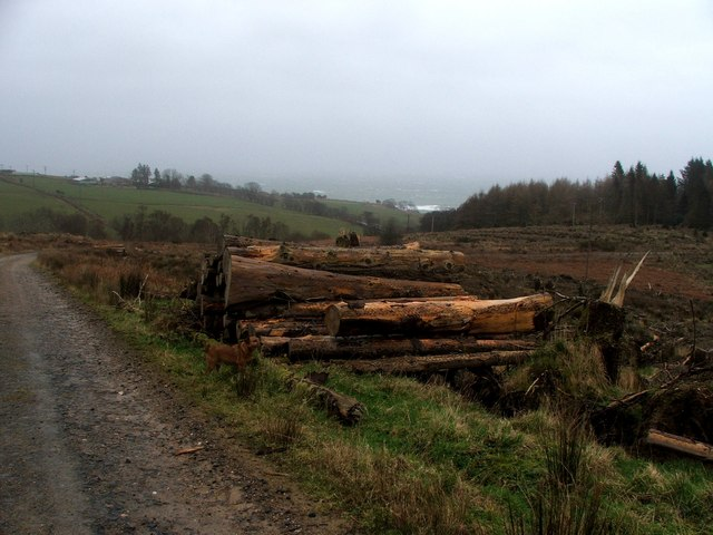 Forestry Clearfell at Kildonan.