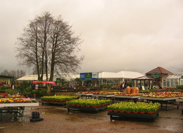 Winter colour at Bridgemere Garden World