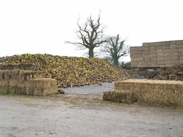 Sugar beet clamp