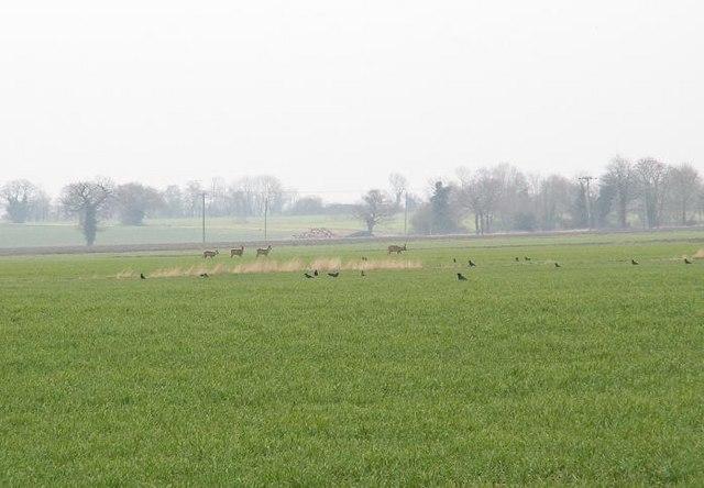 Deer by the runway