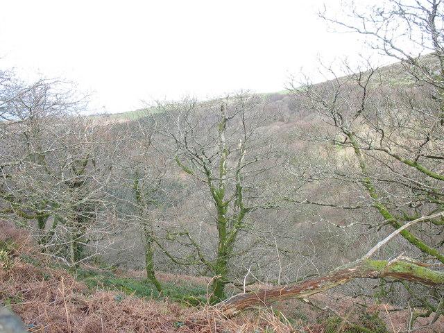 Semi-natural woodland near the SW corner of Cwm-gwared Plantation