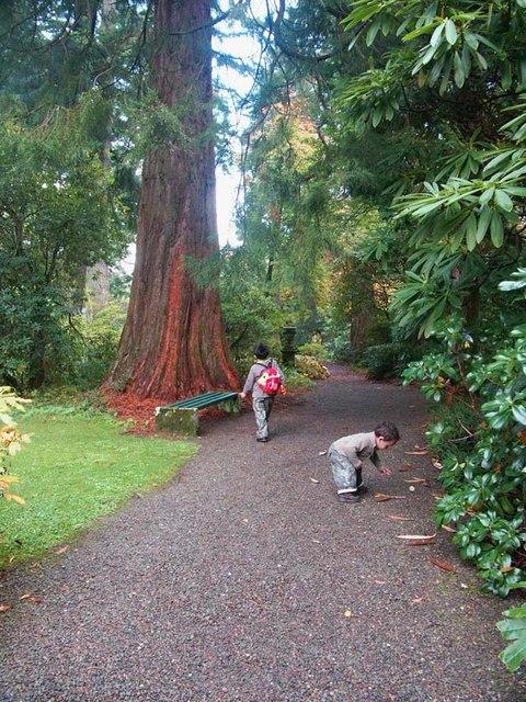 Dawyck Botanical Gardens