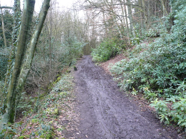 Cocking Tor - Woodland Track