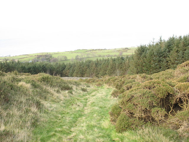 Track through the whins down to the village of Gyrn Goch