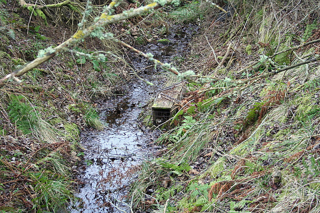 Mink trap in a ditch near Edinvale