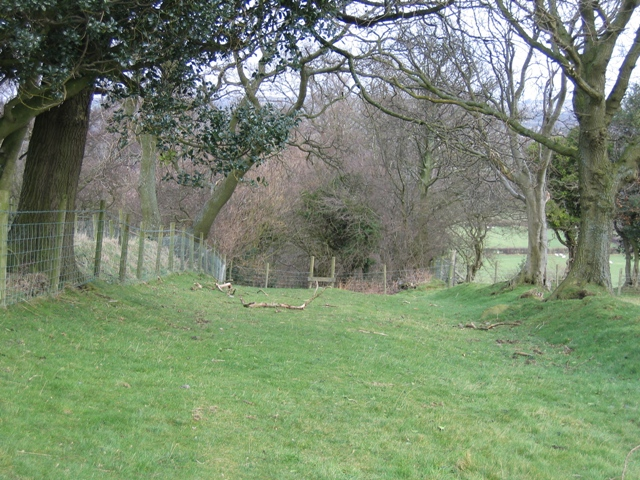 Ancient Trackway below Bryn Golau