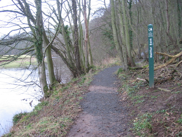 River Ayr Way Wellflat Bank