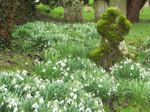 Snowdrops and gravestones at the Church of St John the Evangelist, Langrish