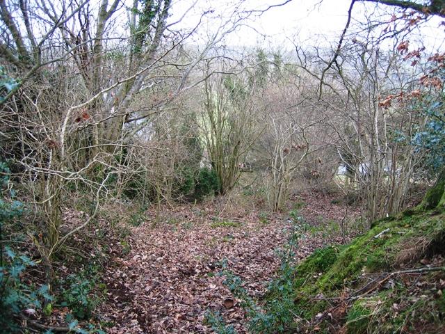 Ancient Track below Bryn Golau
