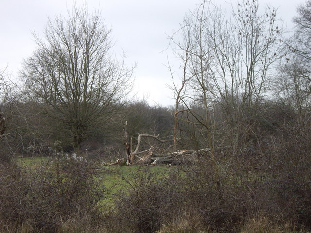 Damaged trees in Hatfield Park