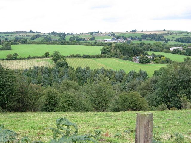 Newly planted oak woodland adj to Whitfield Farm