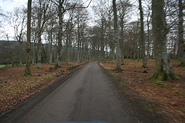 The beech avenue to Westerton.