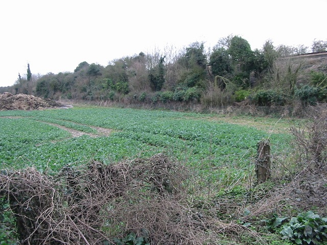 Looking SW along railway embankment