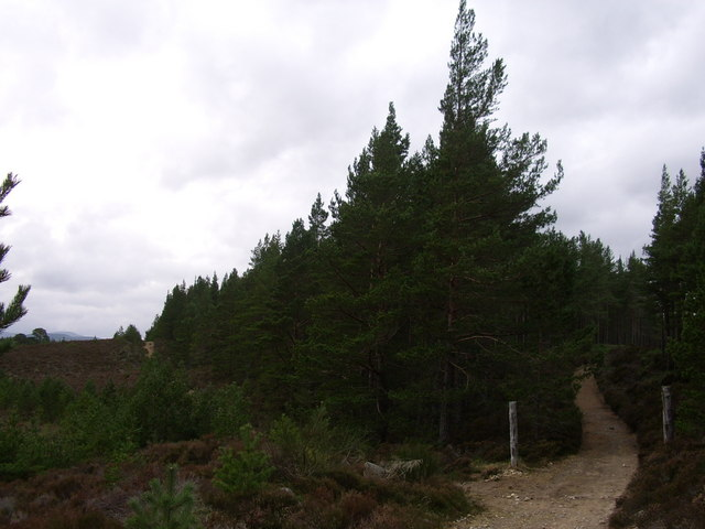 Forestry track and boundary