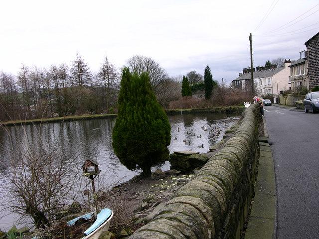 Ducks at Springwood - Ramsbottom