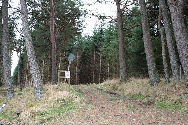 Forest track west of Oak Burn.