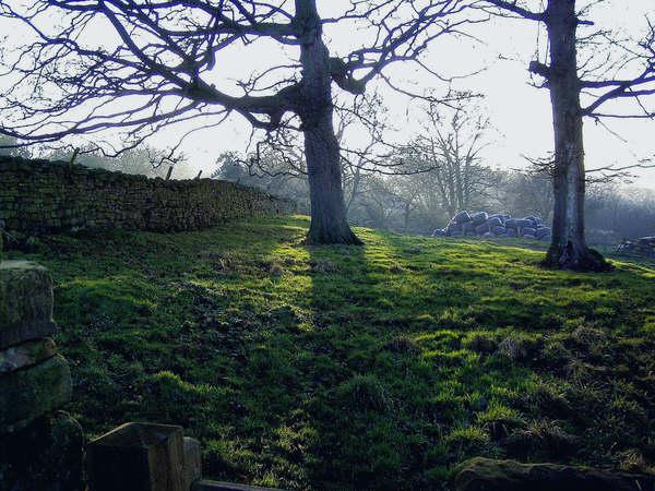 Woodland near Caldbergh