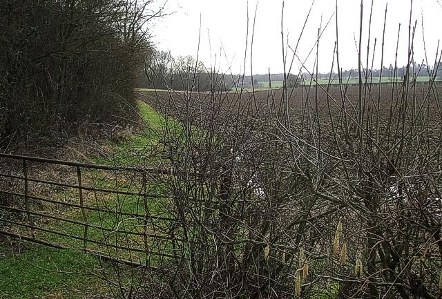 Fields & Gate off Welsh Lane