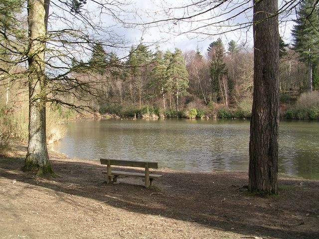 Louisa lake, Bedgebury Forest.