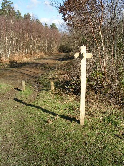 Bridlepath Crossways in Bedgebury Forest
