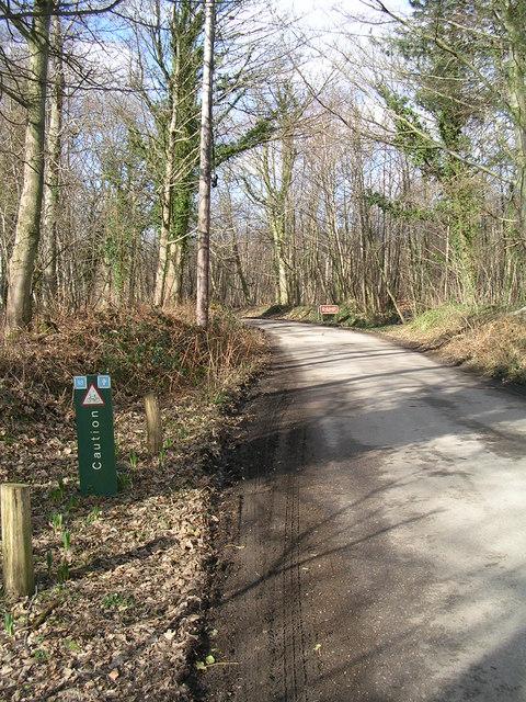 Bedgebury Forest
