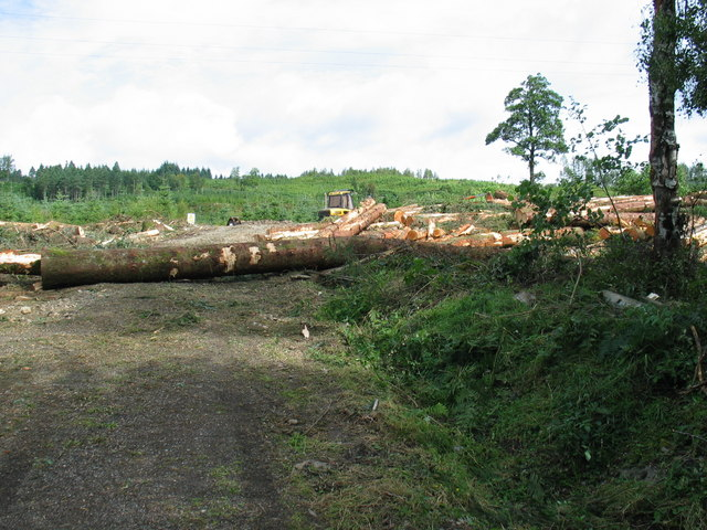 Tree felling by the A830.