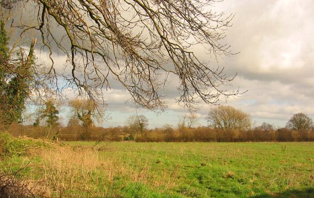 Pasture near Willaston