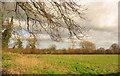 SJ6852 : Pasture near Willaston by Espresso Addict