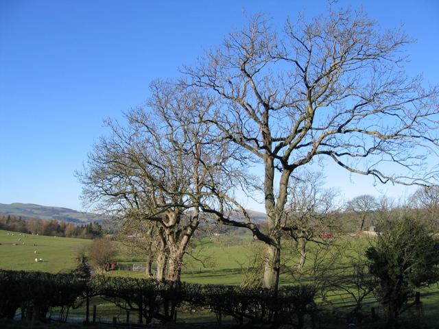 Tree Line near Pen-y-Bryn Farm