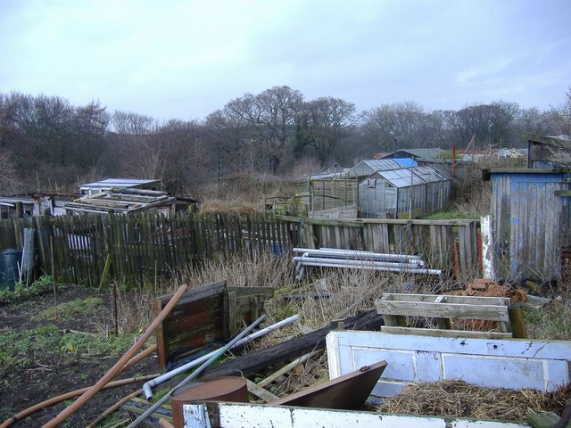 Allotments at Lynemouth