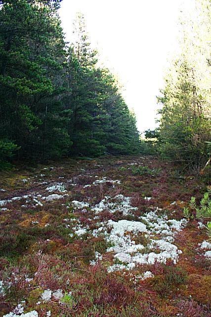 Hill of Maud