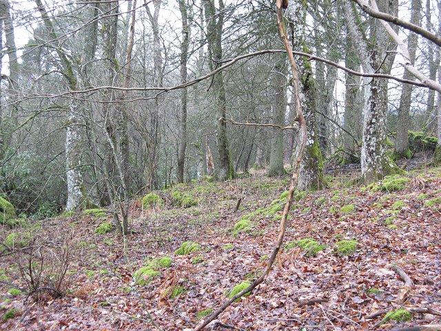 Woodland, Balvarran