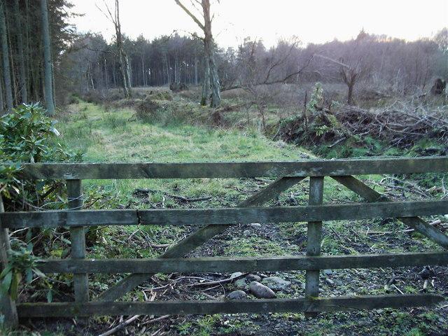 Wood near Beckside