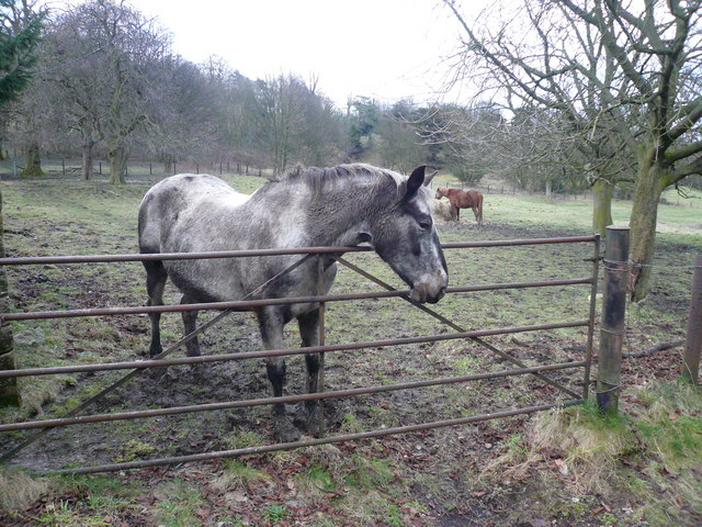 Horses in field adjoining Overton Hall