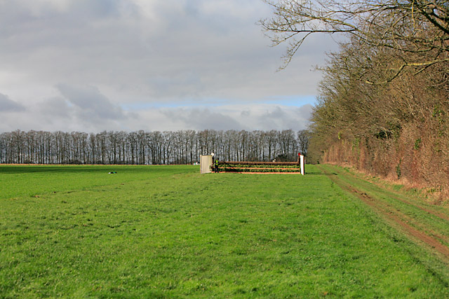 Looking at Target Wood along point-to-point course at Badbury Rings