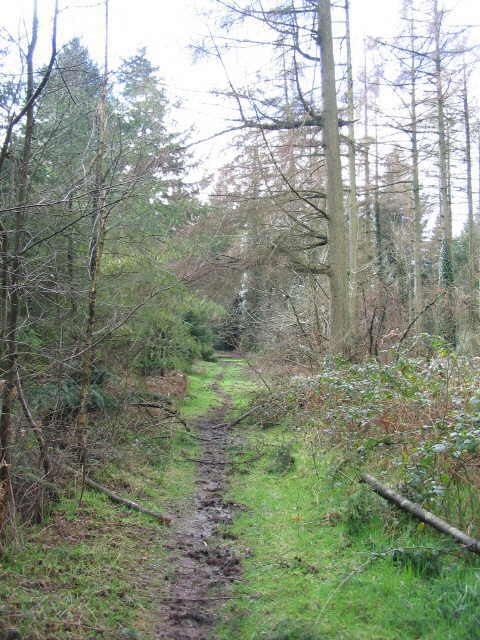 Footpath in Southleigh Wood