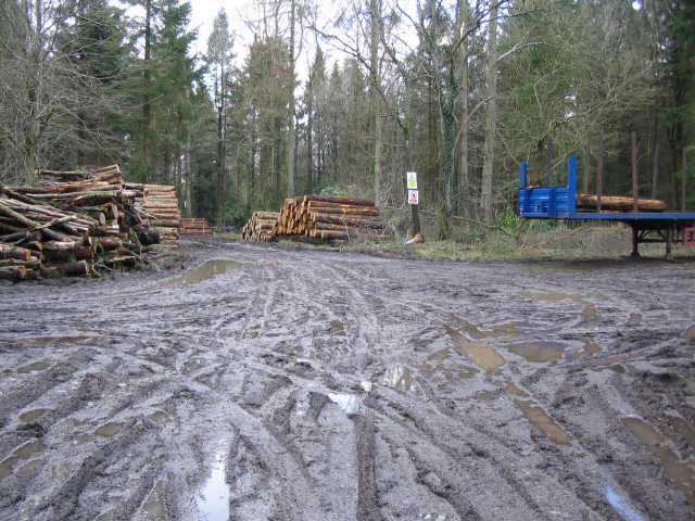 Forestry operations at Eastleigh Wood