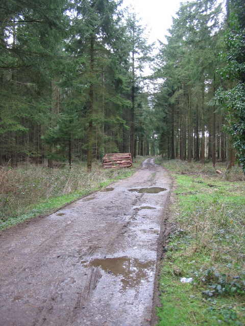 Forest track in Southleigh Wood