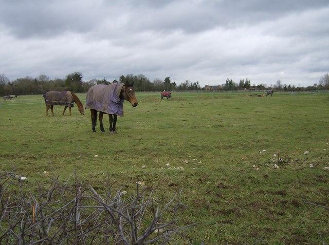 Paddock near Tanner's Farm