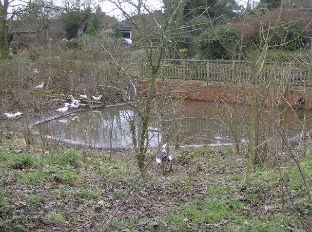 Toker's Green pond