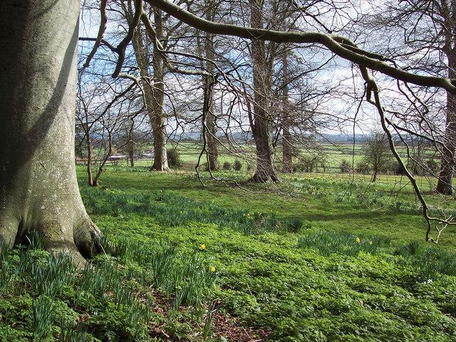 Woodland near the church, Fifehead Magdalen