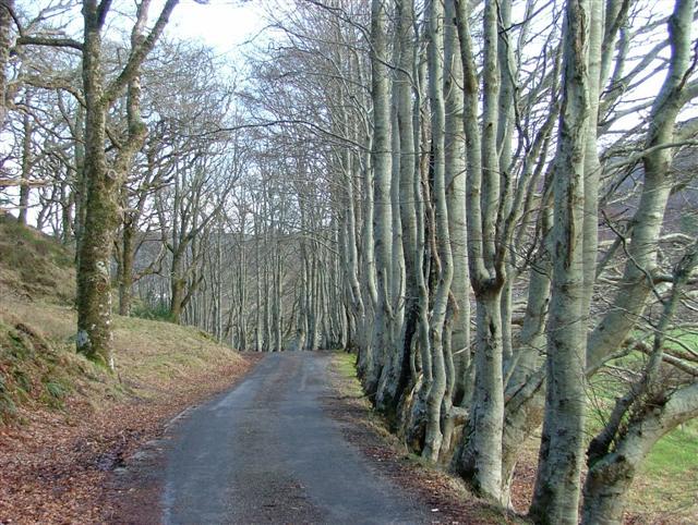 Trees by the Fernaig Road
